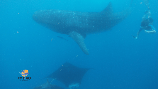 10 facts whale shark and sea lion